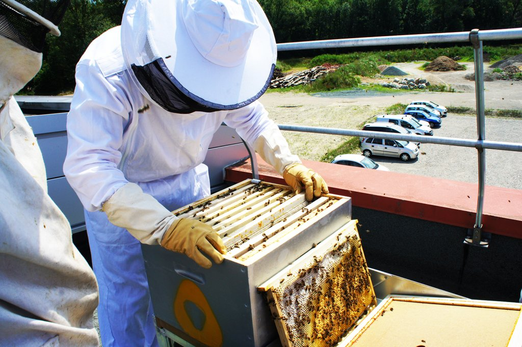 VERTIC and ALPIC hives on roof